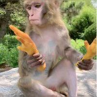 这是啥水果?有认识的吗,我第一眼看成苦瓜了,你呢?