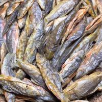 今天的石斑鱼特别靓,有没有喜欢吃鱼干的朋友?中秋送礼特别好,全是野生溪水鱼做出来