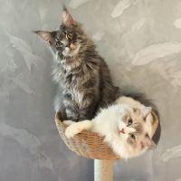 我家猫竟然是只渣猫~未完待续!