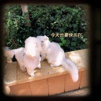 #我家萌宠成精了#这是不是小奶猫踩奶❓