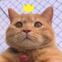 #小小爱宠萌化你#你见过橘猫和银渐层的宝宝吗?