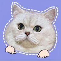#家有猫咪#新鲜出炉的复古饮水机,你们觉得怎么样?
