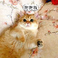 #潮级玩家#小奶猫为什么要叠在一起呢,你们知道吗?